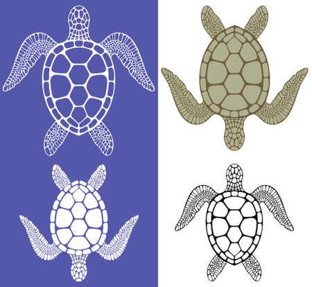 green sea turtle: Turtle