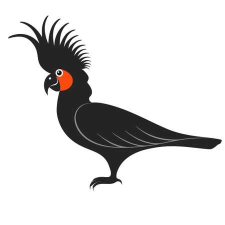 australian culture: Parrot. Cockatoo. Black