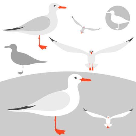 seagull: Seagull Illustration