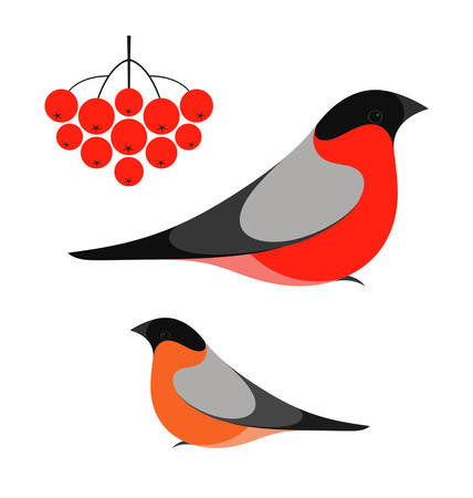 bullfinch: Bullfinch Illustration