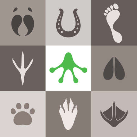 animal foot: Paw Print Illustration