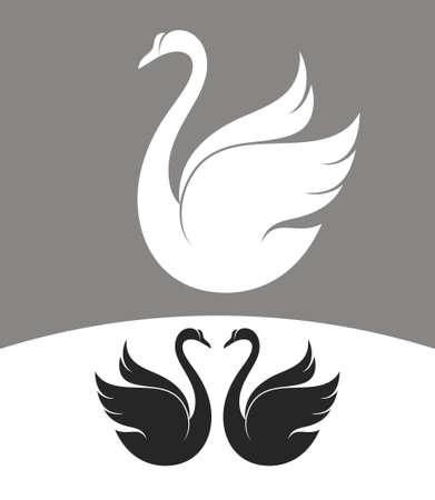 black swan: Swan Illustration