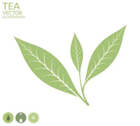 verde: Hoja de té. Aislado en el fondo blanco Vectores