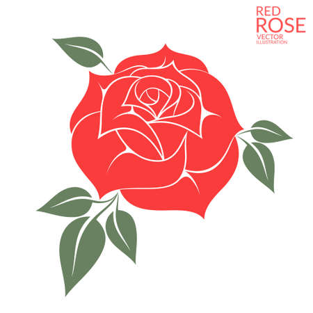 red floral: Red rose Illustration