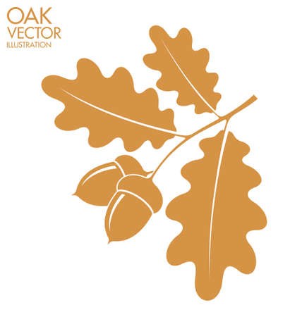 oak leaves: Oak. Branch Illustration