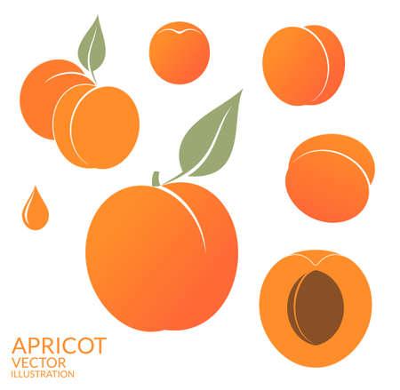 Apricot. Set  イラスト・ベクター素材