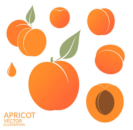 apricots: Apricot. Set Illustration