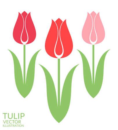 Tulip. Set Vector