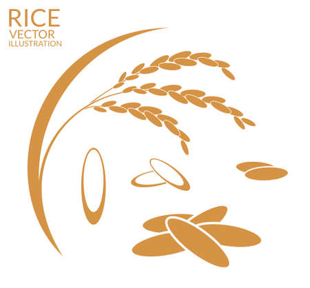 Rice. Set Illustration