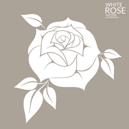 schönheit: Weiße Rose Illustration