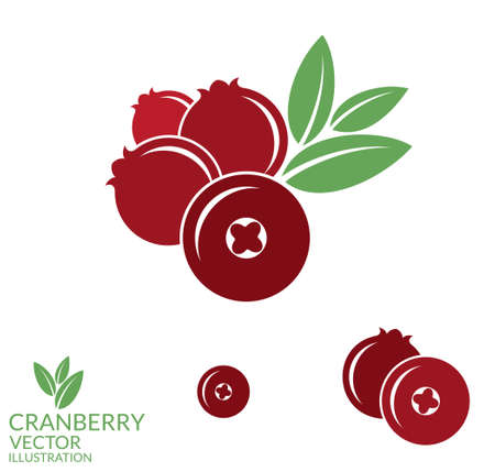 cranberry fruit: Cranberry Illustration