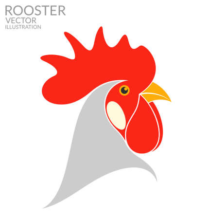 animal cock: Rooster Illustration