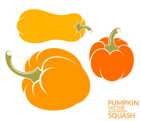 marrow squash: Squash. Pumpkin Illustration