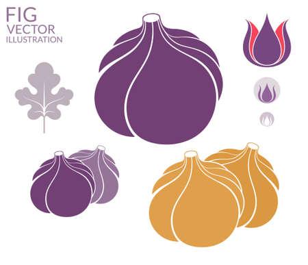 purple fig: Fig. Set Illustration