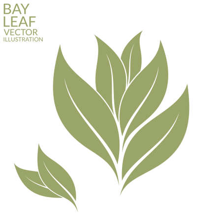 laurel leaf: Bay leaf