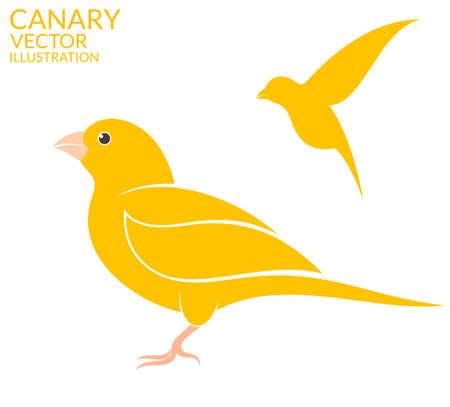 wild canary: Canary bird Illustration