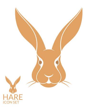 liebre: Hace