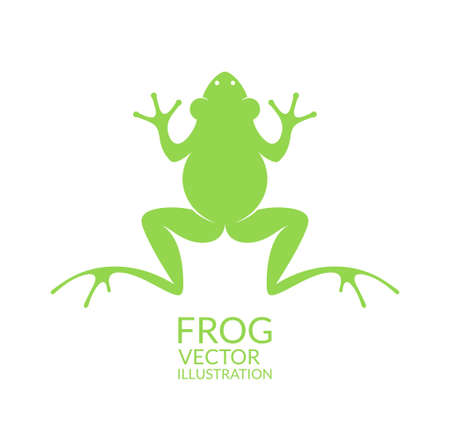 frog green: Frog Illustration
