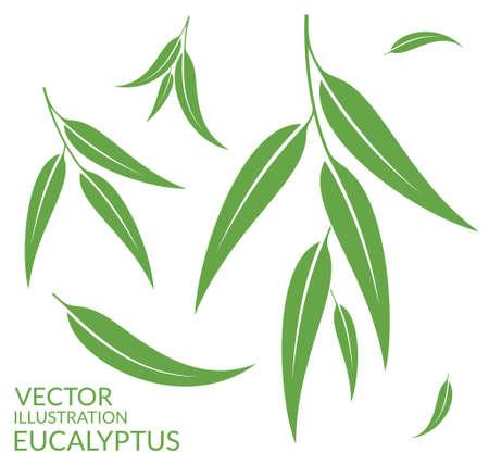Eucalyptus. Geïsoleerde bladeren op witte achtergrond