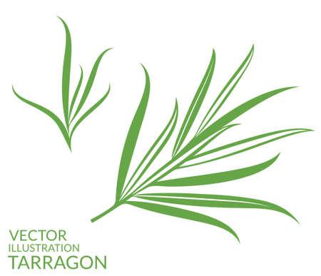 Dragoncello. Isolati piante su sfondo bianco