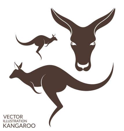 Kangaroo. Isolated animals on white background