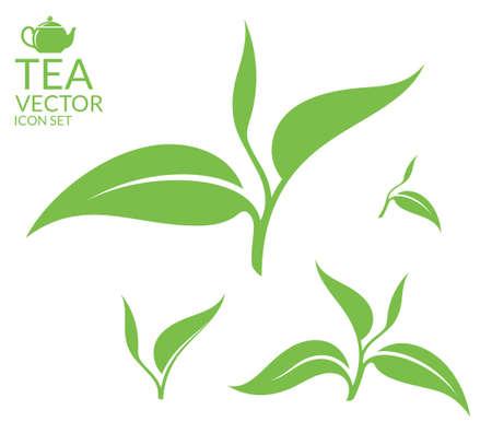 feuilles arbres: Thé. Feuilles isolé sur fond blanc