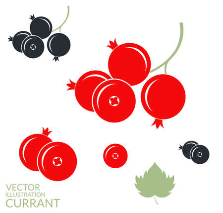Red currant and blackcurrant on white background