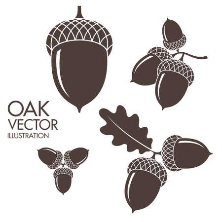 Oak. Isolated acorns on white background