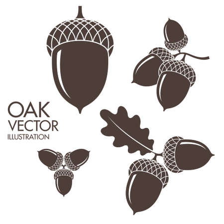 leaves vector: Oak. Isolated acorns on white background