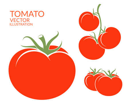 vectors: Tomato. Isolated vegetables on white background