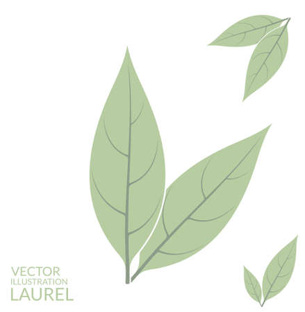 laurel leaf: Laurel leaf Illustration