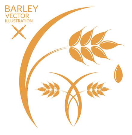 cereal plant: Barley