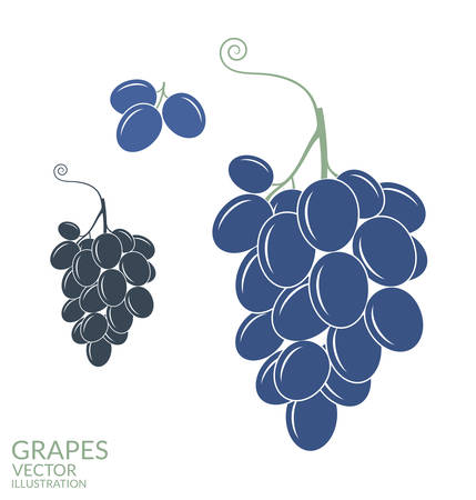 grapes in isolated: Grapes. Isolated fruit on white background