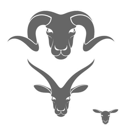 cabras: RAM. Oveja. Cabra Vectores