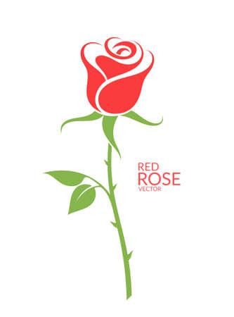 장미. 흰색 배경에 붉은 꽃 일러스트