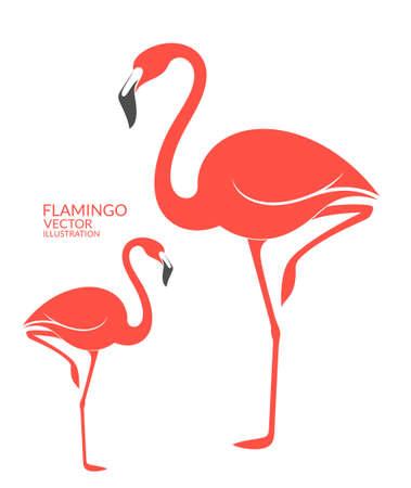 water bird: Flamingo Illustration