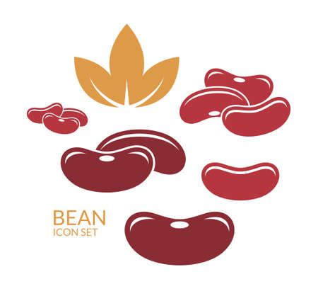 kidney bean: Red kidney bean Illustration