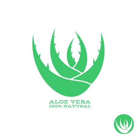 aloe vera plant: Aloe. Abstract green plant