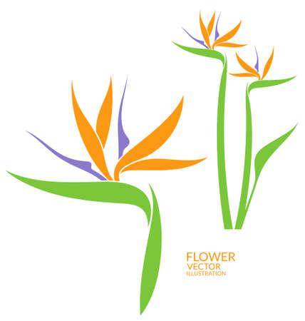 ave del paraiso: AVE del Paraiso. flor tropical