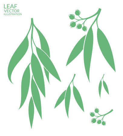gum tree: Eucalyptus. Isolated leaves on white background Illustration