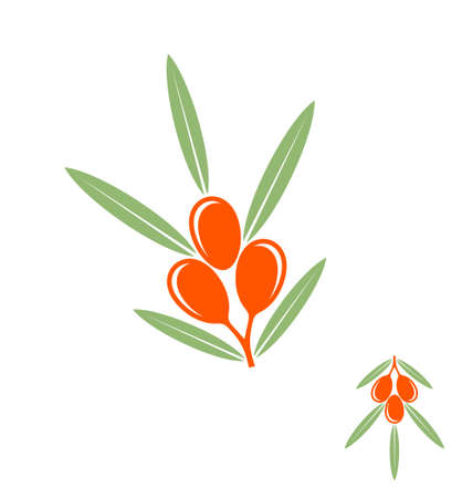 seabuckthorn: Sea buckthorn berries