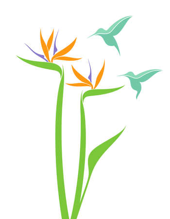 strelitzia: Strelitzia and hummingbird