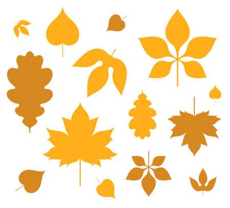 ollection: Leaf. Autumn