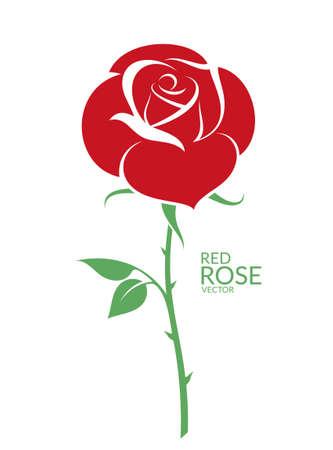 Rode roos. Geïsoleerde bloem op witte achtergrond Vector Illustratie