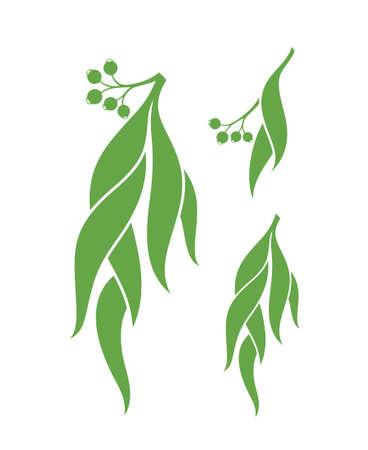 australian culture: Eucalyptus. Vector illustration