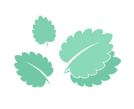 mint leaves: Mint. Isolated leaves on white background