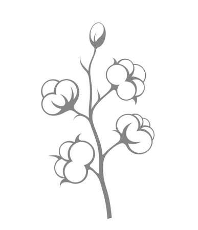 boll: Cotton