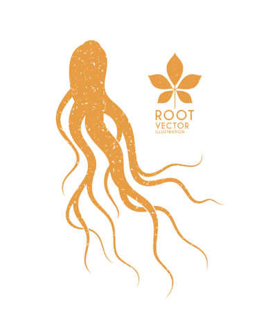 Ginseng. Isolated root and leaf. Vector illustration