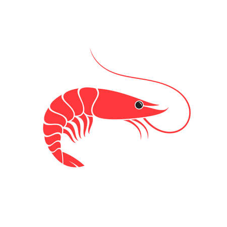 Shrimp. Vector illustration. Prepared prawn on white background