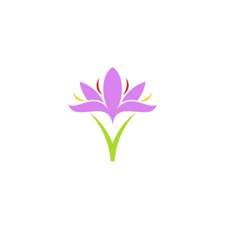 Crocus. Purple flower